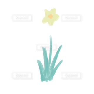 水仙の絵の写真・画像素材[2741583]