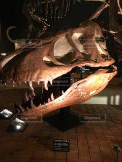 ティラノサウルスの頭蓋骨の化石の写真・画像素材[2139506]