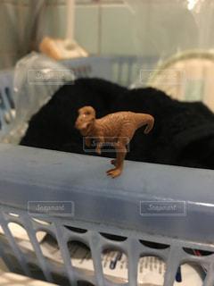 ダイソーに売ってるバスボムのティラノサウルスの写真・画像素材[2139508]
