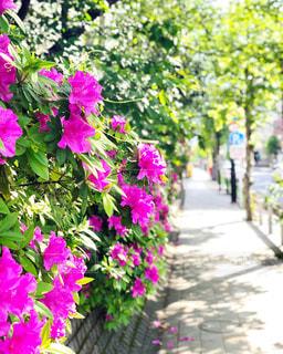 春の散歩道の写真・画像素材[2139884]