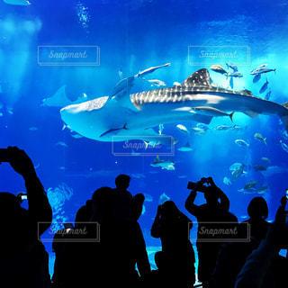 水族館の写真・画像素材[2140333]