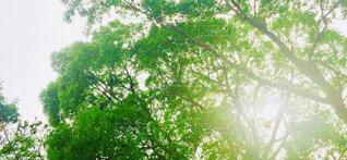 木のクローズアップの写真・画像素材[2141992]