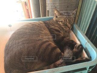 猫の写真・画像素材[82154]