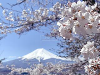 Mt.Fuji +Sakuraの写真・画像素材[2144889]