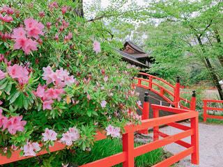 京都 下鴨神社の写真・画像素材[2143836]