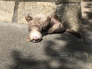 猫の写真・画像素材[2150838]