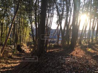 林の中での写真・画像素材[2147119]