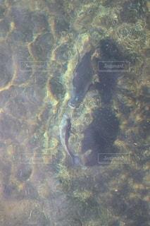 水中写真・画像素材の写真・画像素材[2152279]