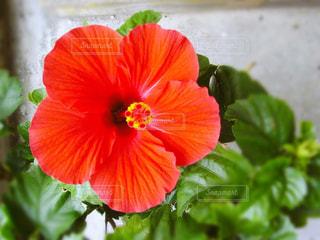 花の写真・画像素材[2166661]