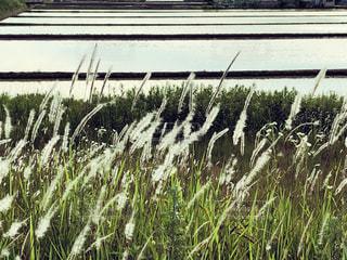 畑の植物の写真・画像素材[2171817]