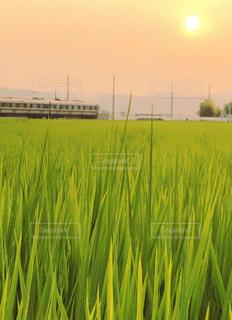 田んぼのある風景の写真・画像素材[2332908]