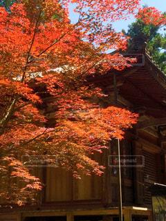 紅葉の秋の写真・画像素材[2415375]