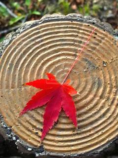 秋の紅葉の写真・画像素材[2731918]