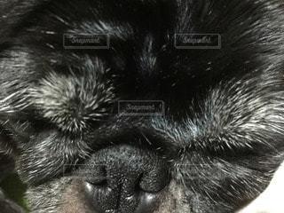 犬の写真・画像素材[82559]