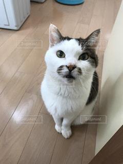 猫の写真・画像素材[2147801]