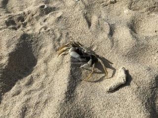 砂浜の蟹の写真・画像素材[2147821]
