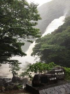 自然の写真・画像素材[102861]