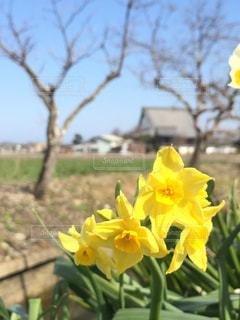 花の写真・画像素材[374932]