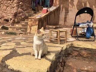モロッコ アイトベンハッドゥの猫の写真・画像素材[2150186]