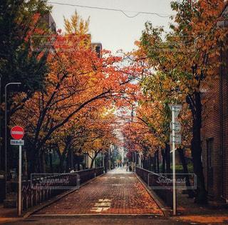 並木道のクローズアップの写真・画像素材[2176622]
