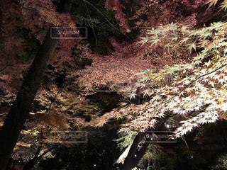 森の中の木の写真・画像素材[3094621]