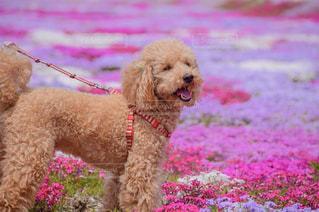 犬の写真・画像素材[2152499]
