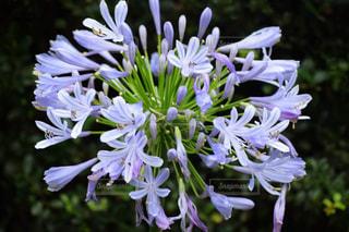 花の写真・画像素材[2161787]