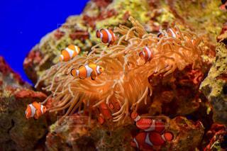 水中の魚の一団の写真・画像素材[2168522]