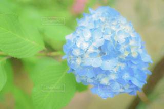 緑の植物のクローズアップの写真・画像素材[2183976]