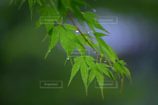 植物の接写の写真・画像素材[2183978]