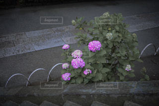 テーブルの上の花の花瓶の写真・画像素材[2183985]