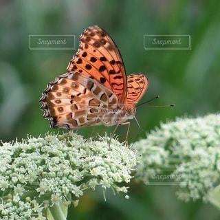 蝶々のくる花壇の写真・画像素材[2168124]