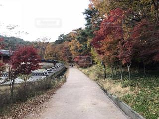 南漢山城の紅葉の写真・画像素材[2158328]