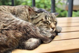 寝る猫の写真・画像素材[2158437]