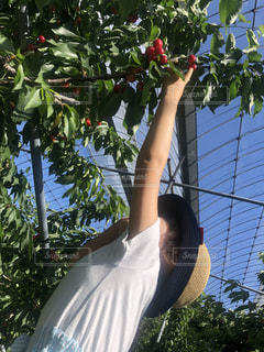 果物の木の前に立っている人の写真・画像素材[2187597]