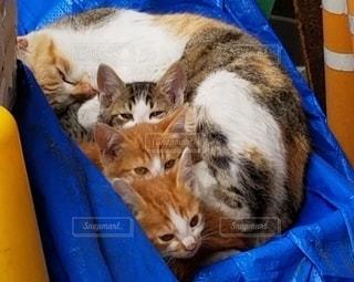 猫の写真・画像素材[2154343]