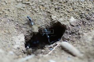 アリの巣の写真・画像素材[2169835]