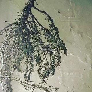 ドライローズマリーの写真・画像素材[2158102]