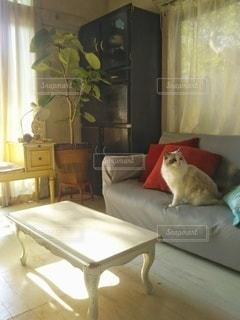 リビングのネコの写真・画像素材[2499838]