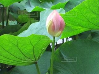 花の写真・画像素材[2156192]