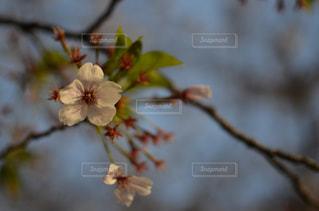 花の写真・画像素材[2156650]