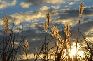 自然の写真・画像素材[2157366]