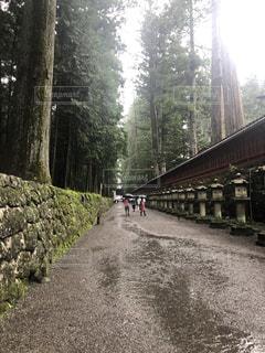 木々を背景にした線路上の大きな長い列車の写真・画像素材[2355324]