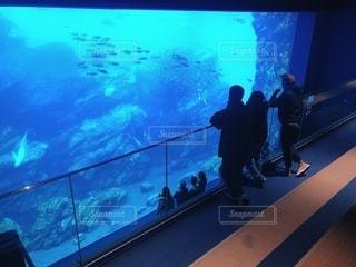 魚の写真・画像素材[3517709]