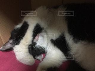 猫の写真・画像素材[107765]