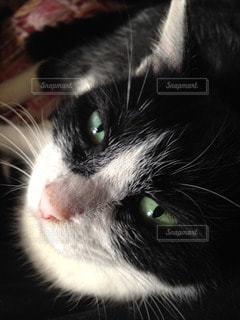 猫の写真・画像素材[114303]