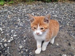 猫の写真・画像素材[114315]