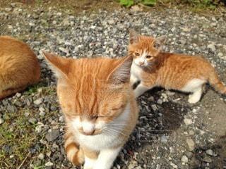 猫の写真・画像素材[114319]