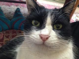 猫の写真・画像素材[114363]