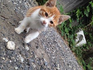 猫が好きの写真・画像素材[120953]